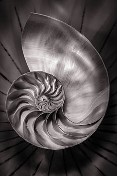Mike Penney - Nautilus Shell 8