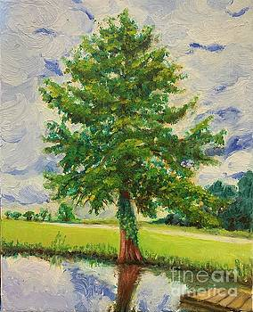 NC Cypress by Boni Arendt