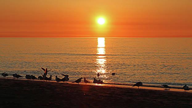 A Sunrise by Steve Bell