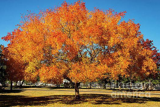 Bob Phillips - Neighborhood Autumn Color One