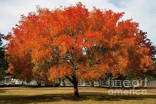 Bob Phillips - Neighborhood Autumn Color Two