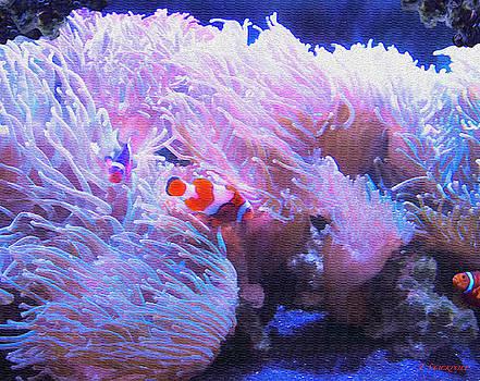 Nemo - The Clownfish by Jennifer Stackpole