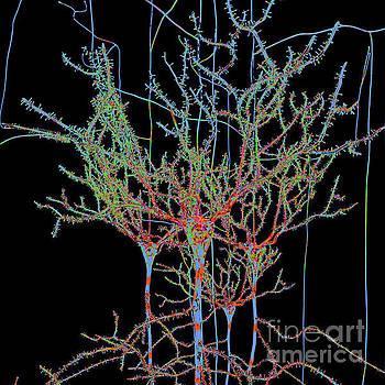 Neuron Field Vector Blue Green by Russell Kightley