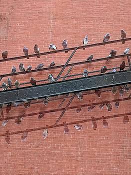 Cameron Dixon - New York Pigeons Fire Escape