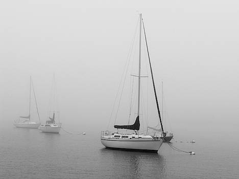 Newport Sails In Fog by Jeffrey PERKINS