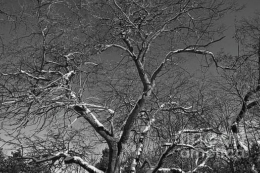 Niagara Falls Winter Textures by Tony Lee