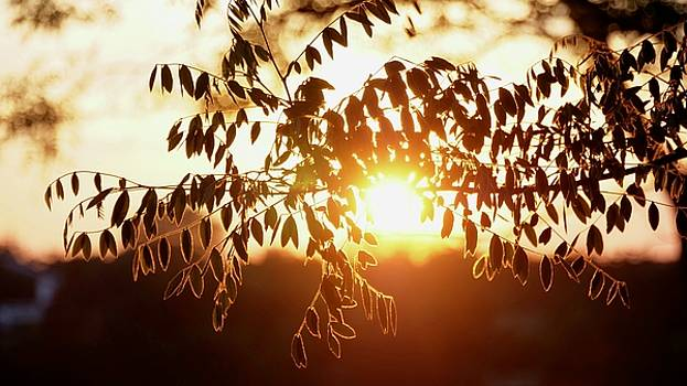 Night Tree On Sunrise Background by Tamara Sushko