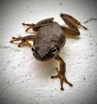Ninja Frog by Vincent Autenrieb