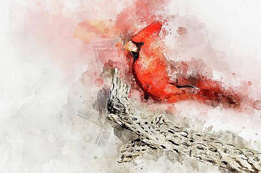 Northern Cardinal watercolor  by Bryan Keil