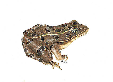 Northern leopard frog by Cindy Hitchcock