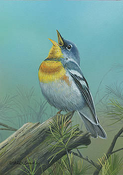 Northern Parula  by Mike Brown