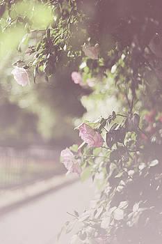 Jenny Rainbow - Nostalgic Roses of Franciscan Garden 11