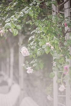 Jenny Rainbow - Nostalgic Roses of Franciscan Garden 9