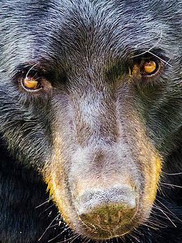 Nosy Bear by Paul Croll