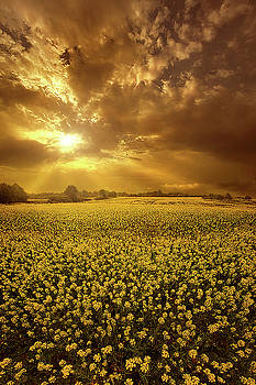 Nothing More Than What We Are by Phil Koch