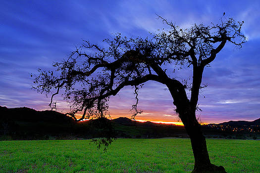 Oak at Sunset by John Rodrigues