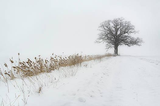 Oak in Fog by Ludwig Riml