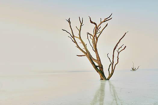Oak in the Ocean by Jon Glaser