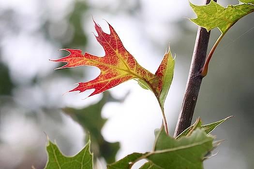 Oak Leaf Turning by Sarah Lilja