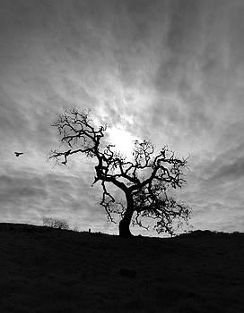 Oak Tree Silhouette by John Rodrigues