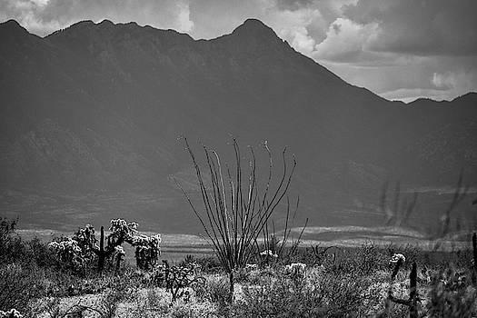 Chance Kafka - Ocotillo and Mount Wrightson Black and White