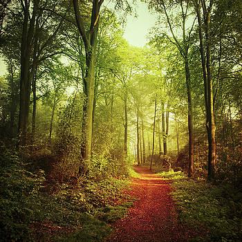 October Forest by Dirk Wuestenhagen