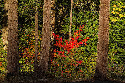 October forest by Ulrich Burkhalter