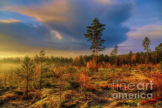 October morning 10 by Veikko Suikkanen