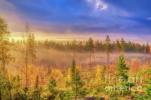 October morning 14 by Veikko Suikkanen