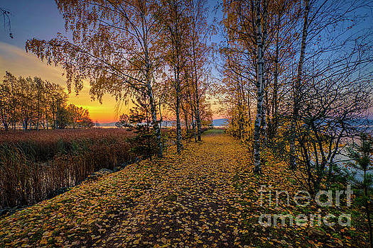 October morning 15 by Veikko Suikkanen