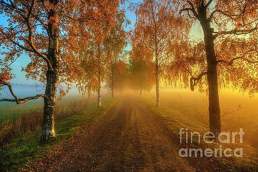 October morning 5 by Veikko Suikkanen