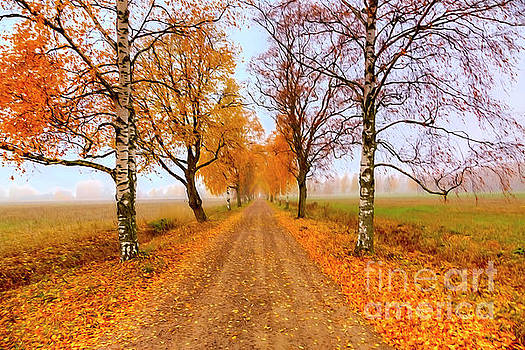 October morning 6 by Veikko Suikkanen