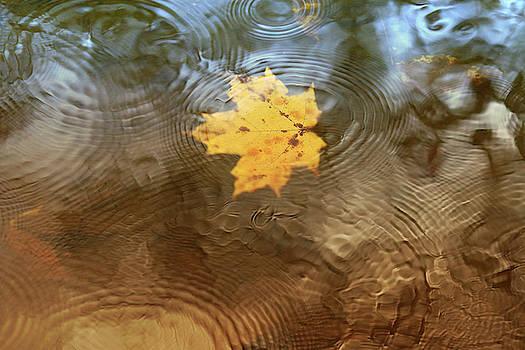 October Rain by Rob Blair