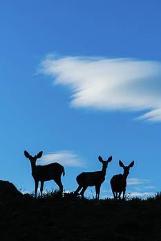 Oh Deer by Dave Matchett
