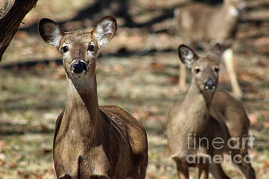 Oh Deer by Karen Adams