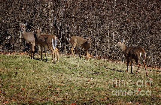 Oh Deer, oh deer, oh deer, oh deer by Karen Adams