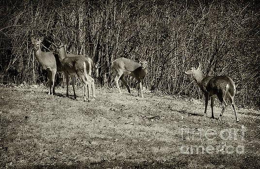 Oh Deers, Black and White by Karen Adams