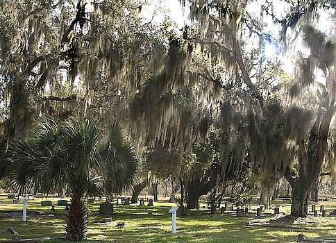 Old Cemetery with Moss Covered Trees by Yvonne Sewell
