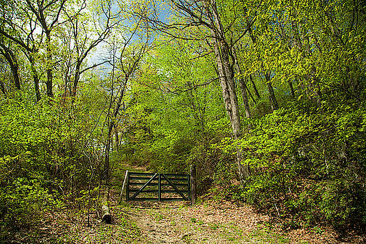 Old Gate At The Preserve by Karol Livote