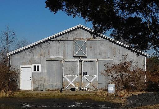 Old Gray Barn with Cats by Melinda Saminski