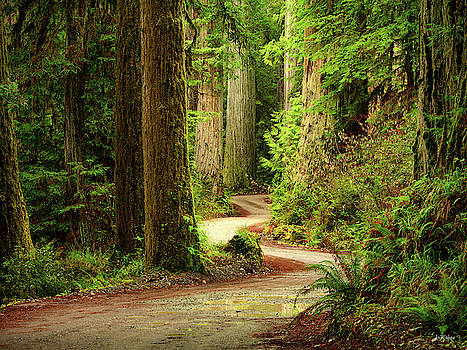 Old Growth Forest Route by Leland D Howard