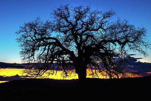 Old oak sunset by Dave Prendergast