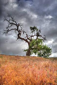 Old Oak Tree by John Rodrigues