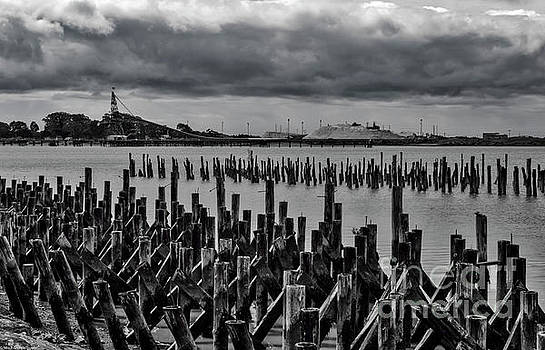 Old Pilings by Mitch Shindelbower