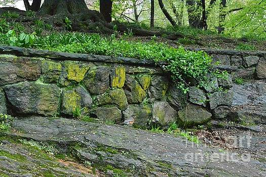 Old Stone Wall - Central Park New York by Miriam Danar