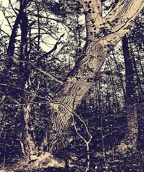Old tree by Roman Aj