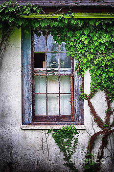 Old Window with Ivy by George Oze