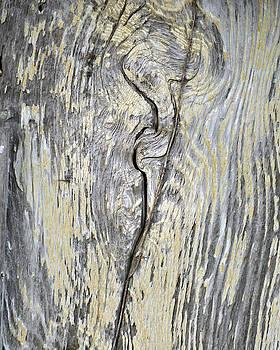 Old Wood by Savannah Gibbs