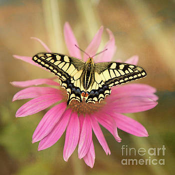 Old World Swallowtail by Mariola Bitner