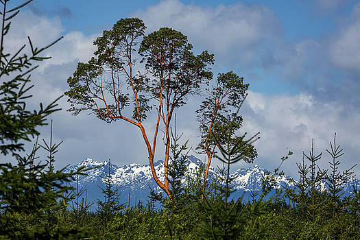 Mike Penney - Olympic Mountains 21